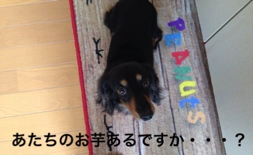 fc2blog_20160401162324313.jpg