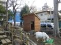 ユリとヤギ小屋