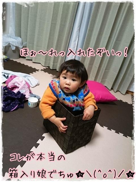 箱入り娘2016