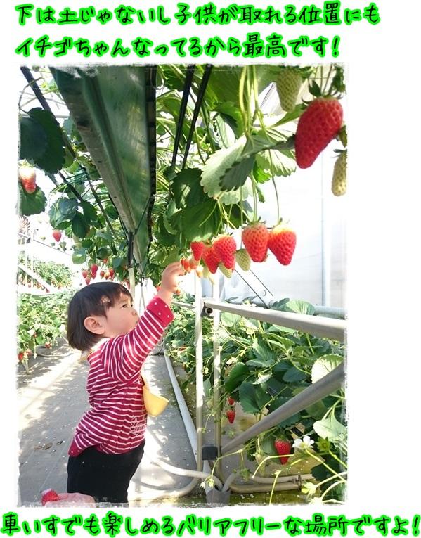 イチゴに夢中2016