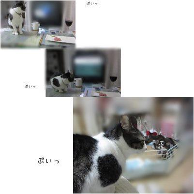 catsぷいっ