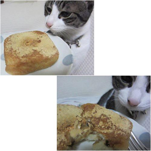 catsぱん
