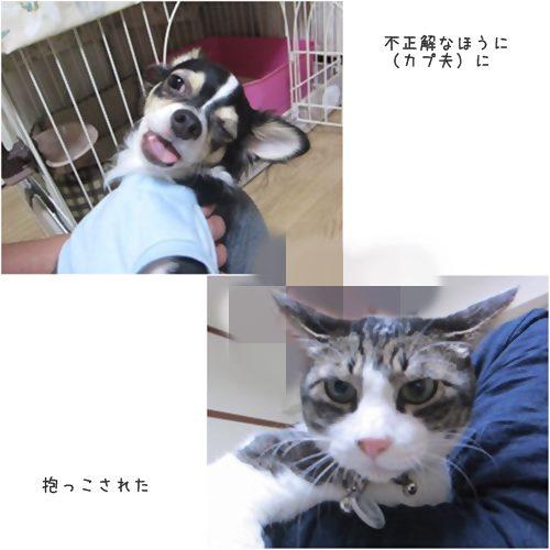 cats不正解