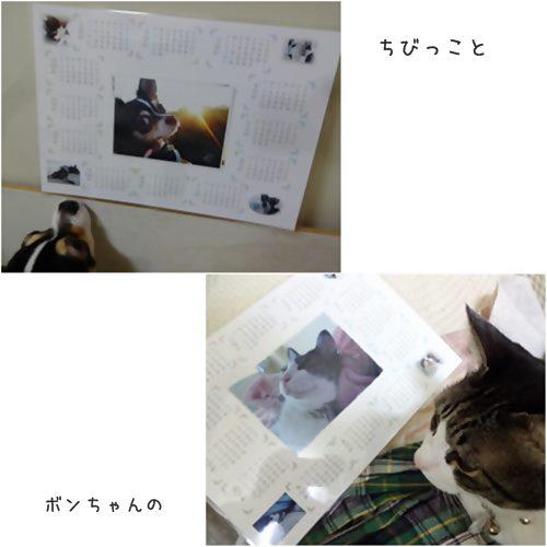 cats1_20160130200831c21.jpg