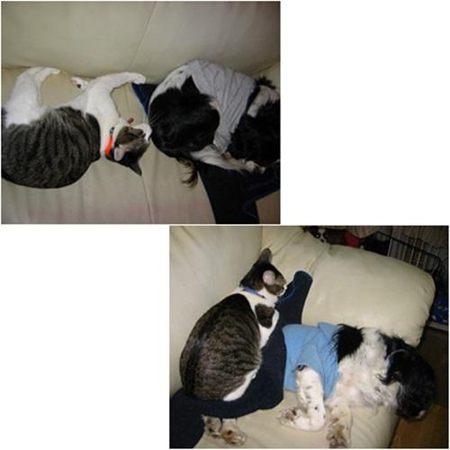 cats1_20160304201645679.jpg