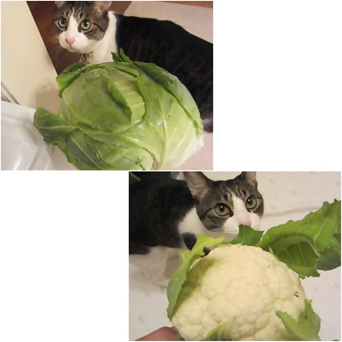 cats1_20160309185313aa8.jpg