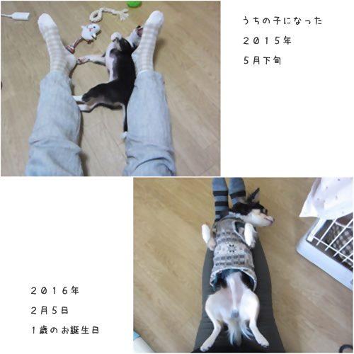 cats2_201602051601241cc.jpg