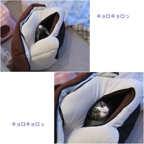 cats35.jpg