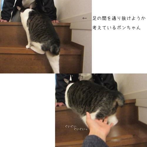 cats5_201602152010182de.jpg