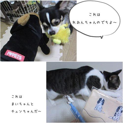 cats_201512261617154ca.jpg