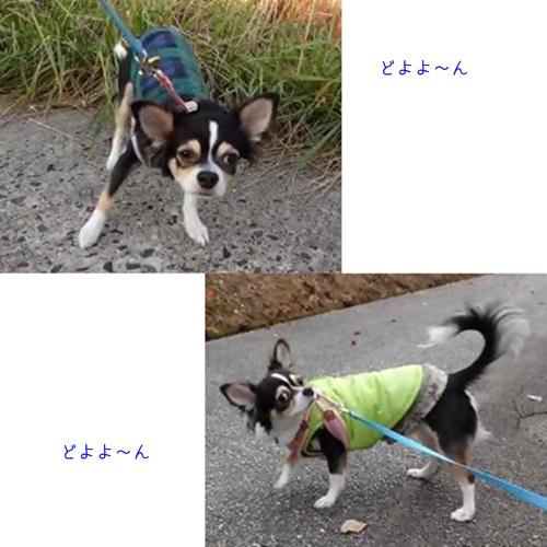cats_20160101165225e59.jpg