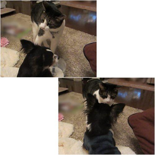 cats_20160109204402673.jpg