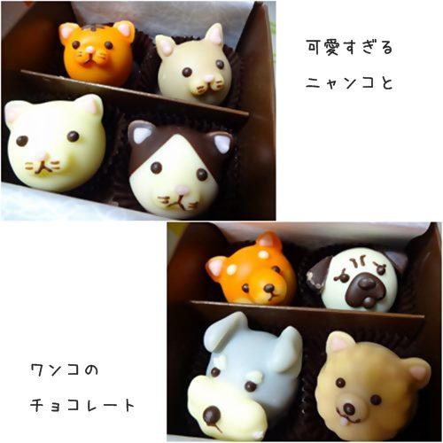 cats_201601302009377b1.jpg