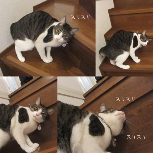 cats_20160215201016bdd.jpg