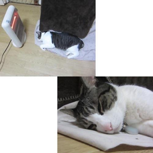 cats_201602191928170c6.jpg