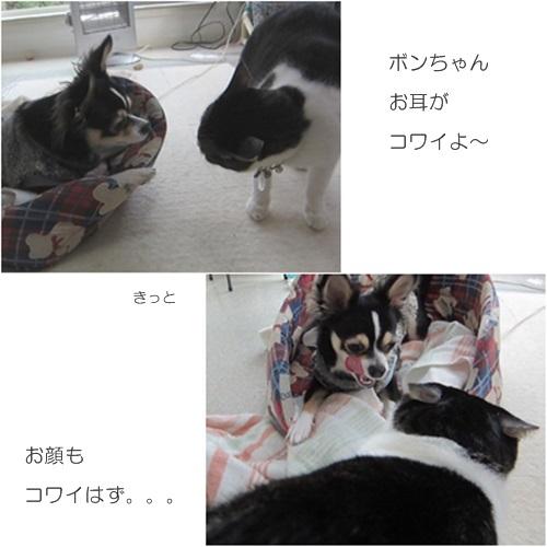 cats_20160302211422a0b.jpg