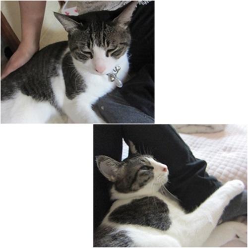 cats_2016030420495897d.jpg