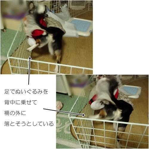 cats_20160312203518b5a.jpg