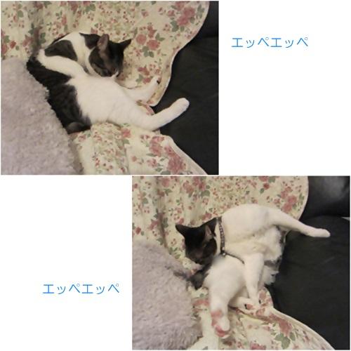 cats_20160315211153cab.jpg