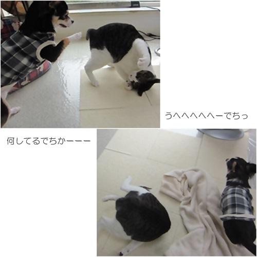 cats_2016032821001909e.jpg