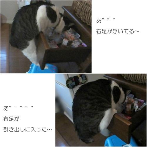 cats_20160401200150bfb.jpg