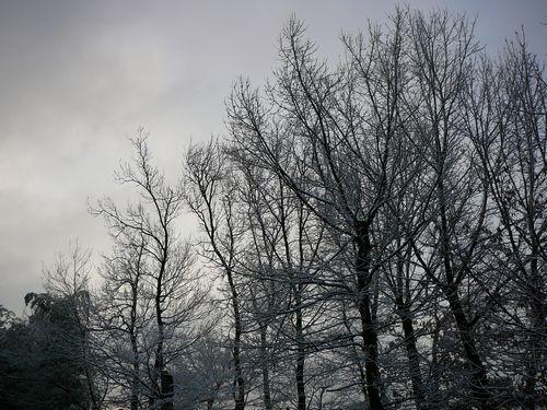 2月25日 枯れ木に花