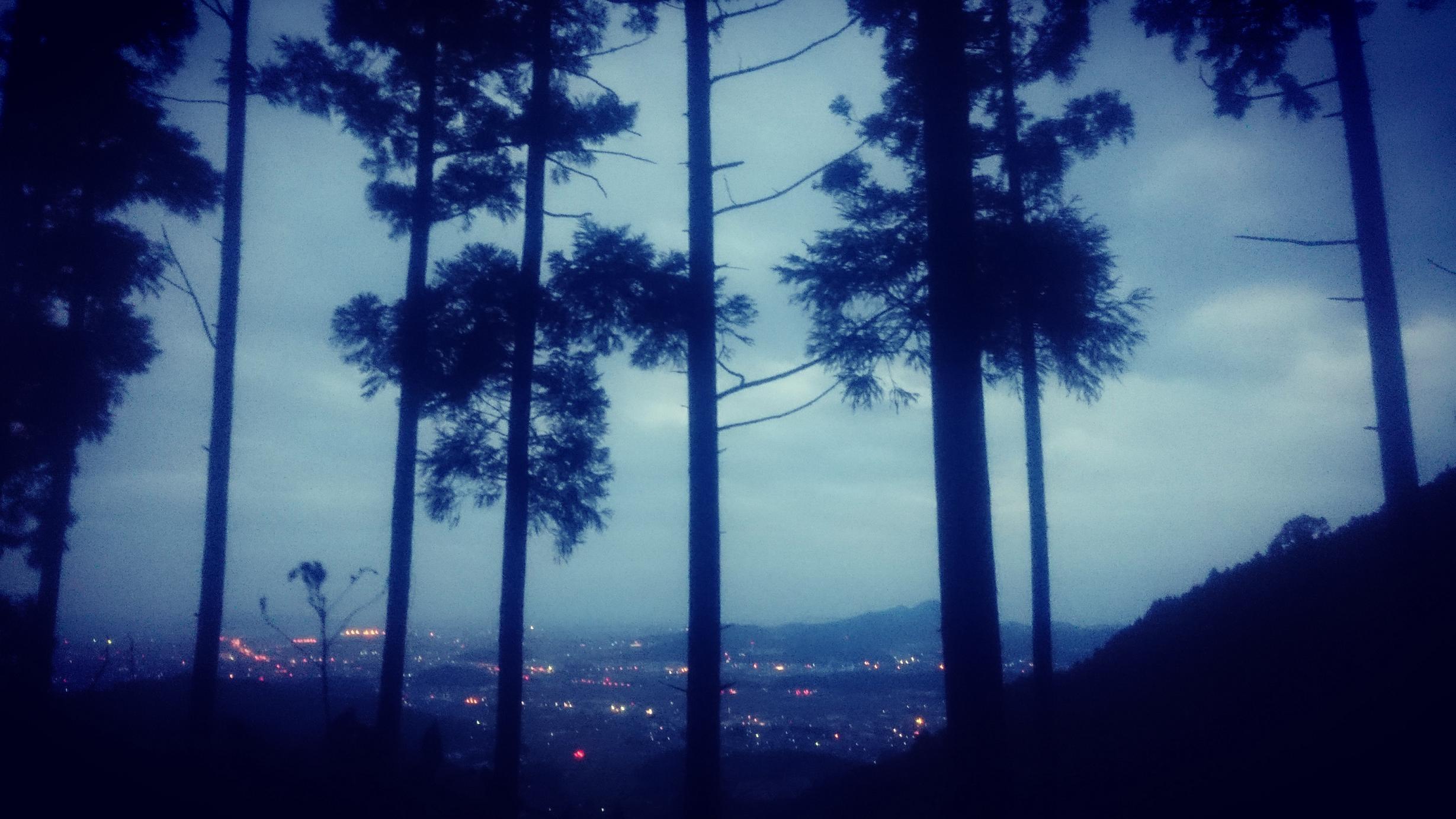 若杉山の朝