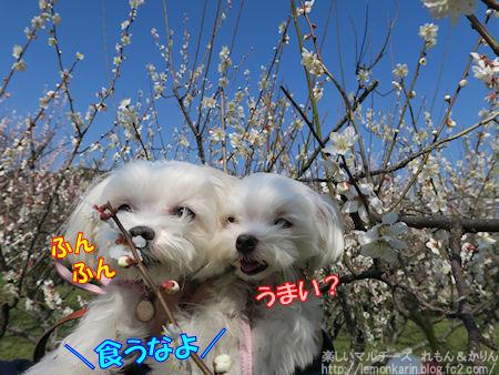 20160318_4.jpg