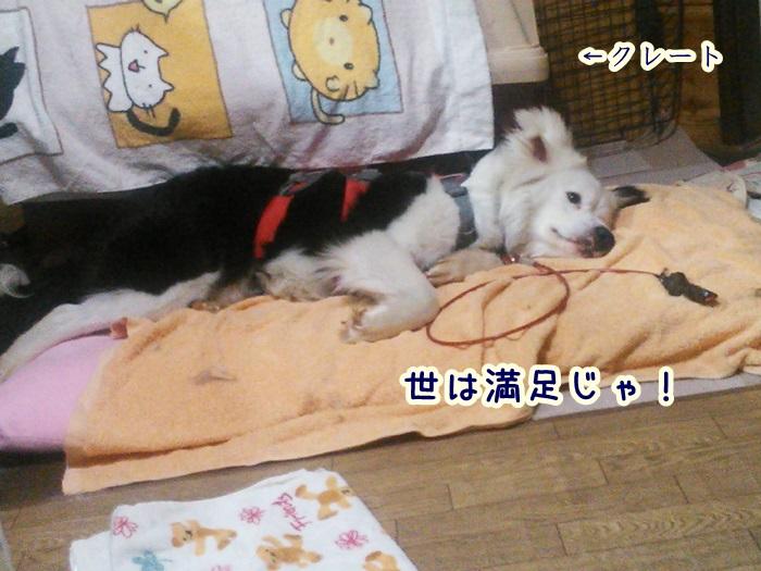 NCM_0226_20160327204650935.jpg