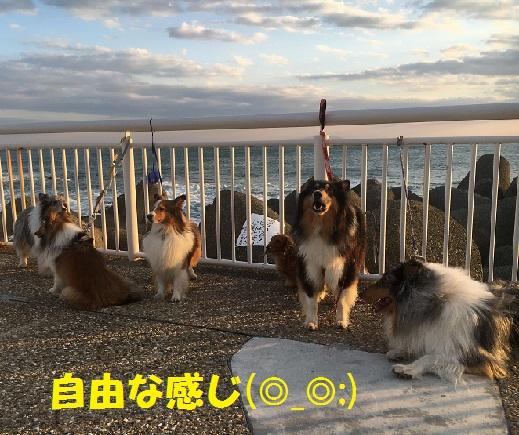 江ノ島91