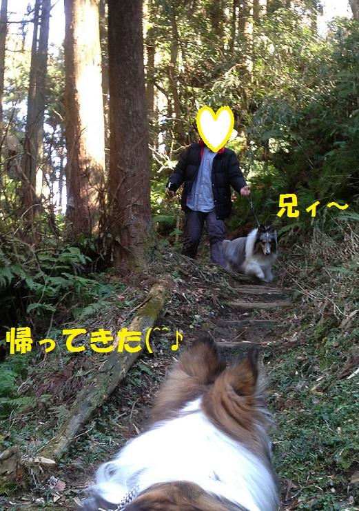 鎌倉散歩991