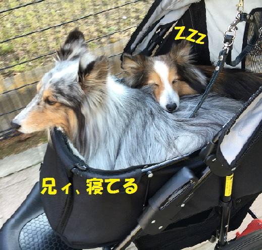鎌倉散歩995