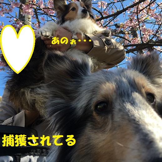 鎌倉散歩994