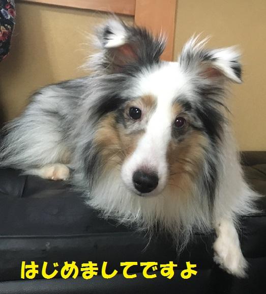 ぱらるさん