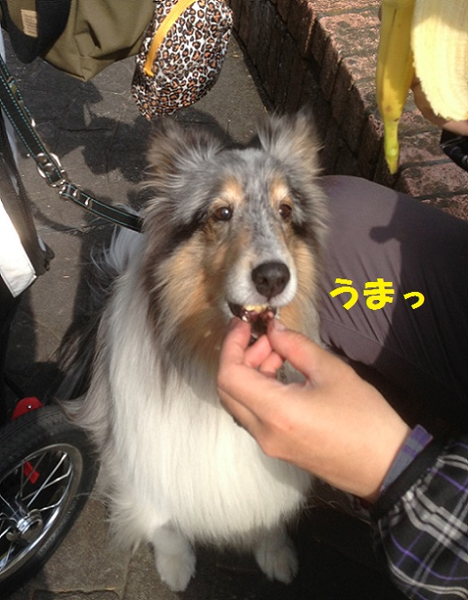 寿福寺94