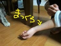20160329_00878.jpg