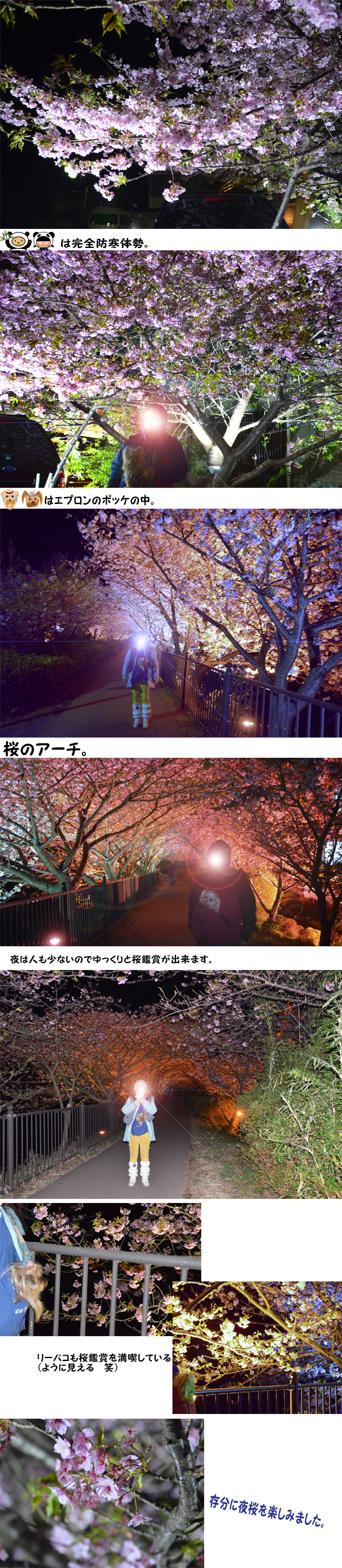 夜桜 のコピー