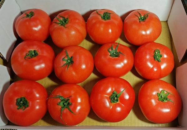 トマト のコピー