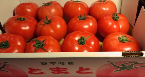 野木町トマト