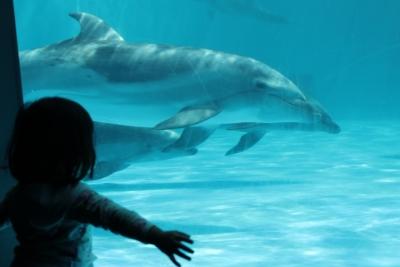 orcashow1.jpg