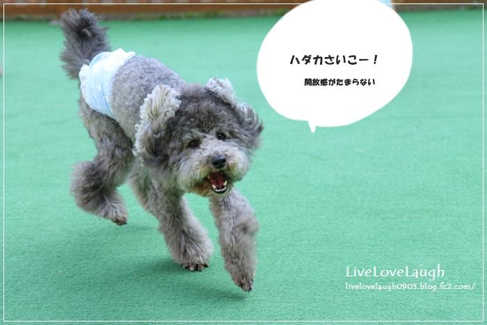 IMG_8251だっぷる7
