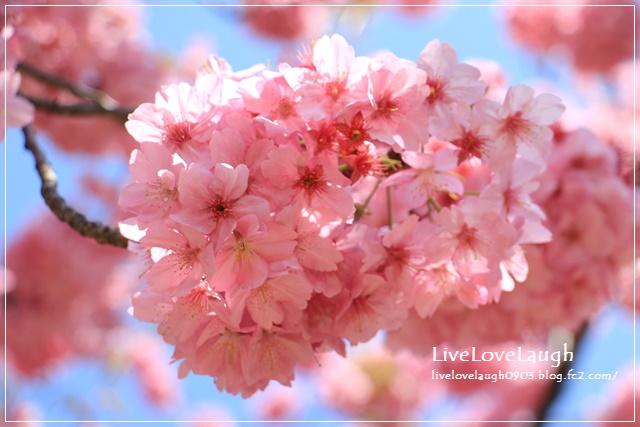 IMG_8803ヨコハマ5
