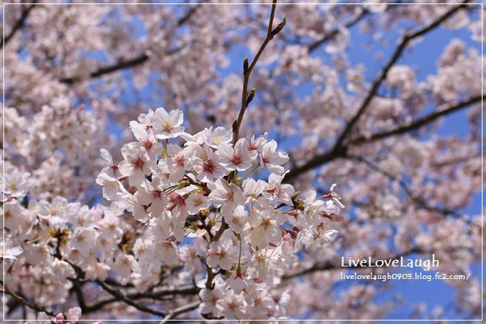 IMG_8951YEG4-4.jpg