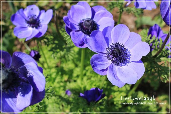 IMG_8963YEG4-3.jpg