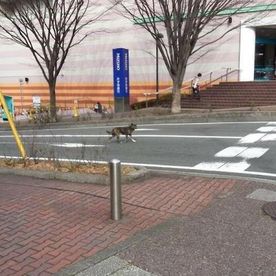 kochimaru20160218.jpg