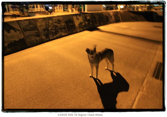 野犬1602tangashima049.jpg
