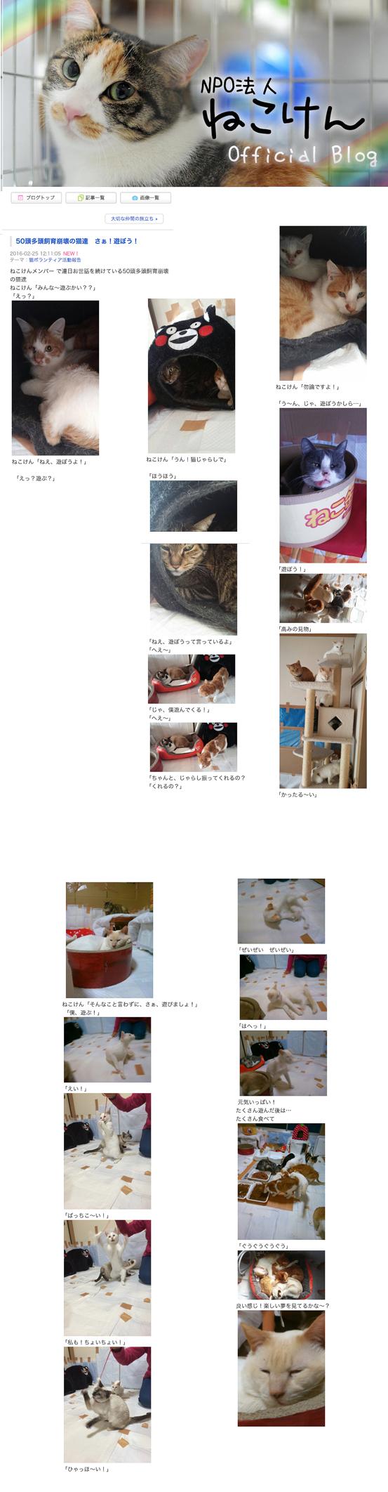 50頭多頭飼育崩壊の猫達 さぁ!遊ぼう! NPO法人ねこけん Official Blog-1