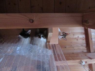 猫部屋覗くと・・