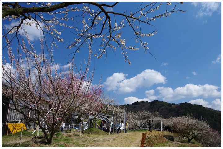 2016年3月1日 橋本・九度山 (11)