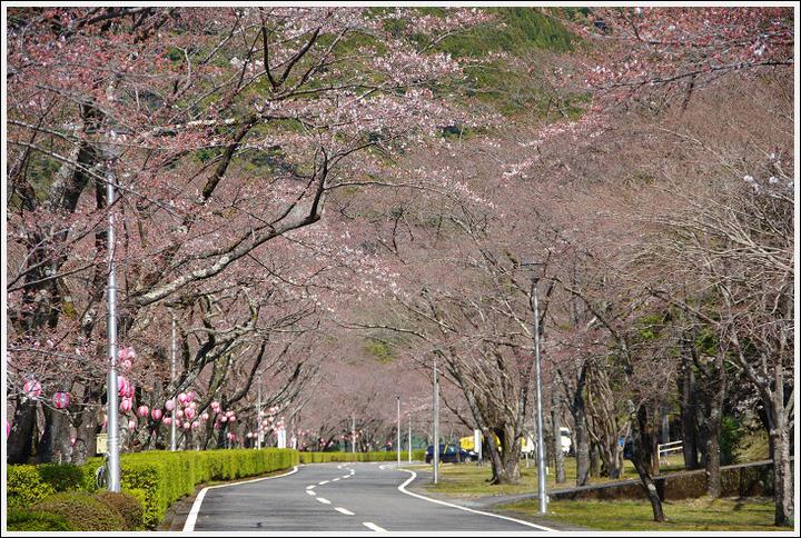 2016年3月29日 下北山スポーツ公園 (7)